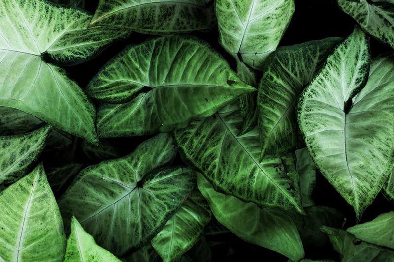 Nutze die Sprüche über Nachhaltigkeit und Umweltschutz