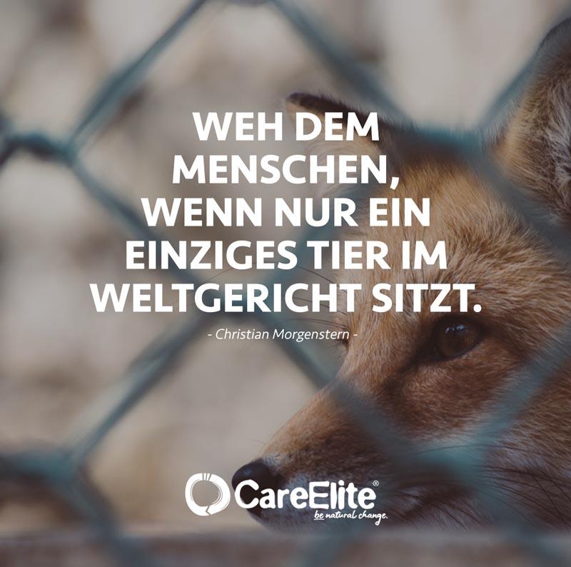 Tier im Weltgericht Tierschutz Zitat