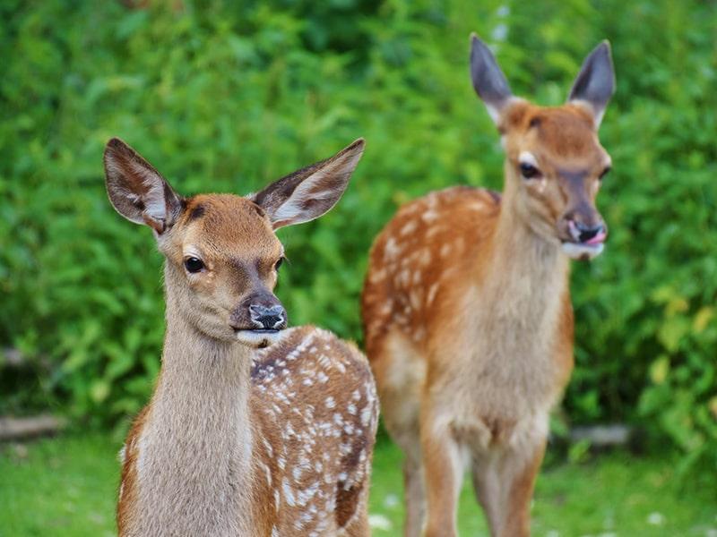 Tieren helfen und nicht in die Natur eingreifen