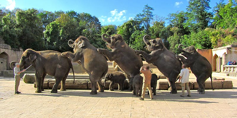 Elefanten - Tiere in der Unterhaltungsindustrie