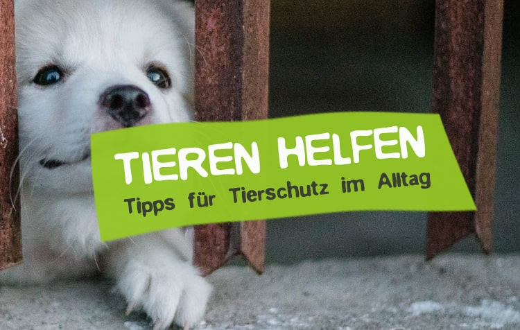 Tierschutz im Alltag - So hilfst du Tieren