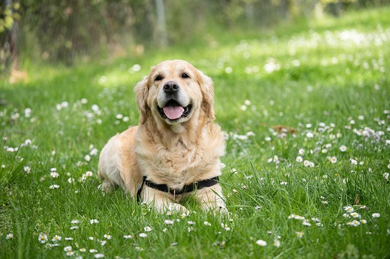 Hunde - Tieren helfen im Alltag