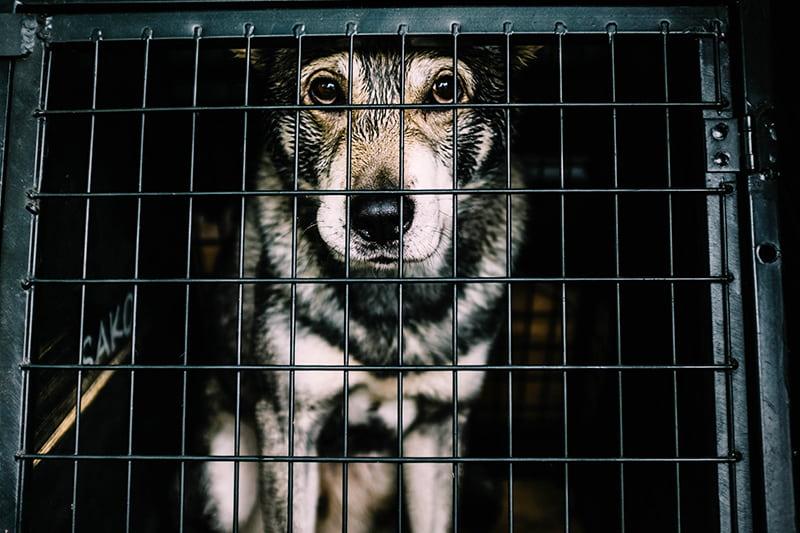 Ursachen von Tierquälerei und Tier-Missbrauch