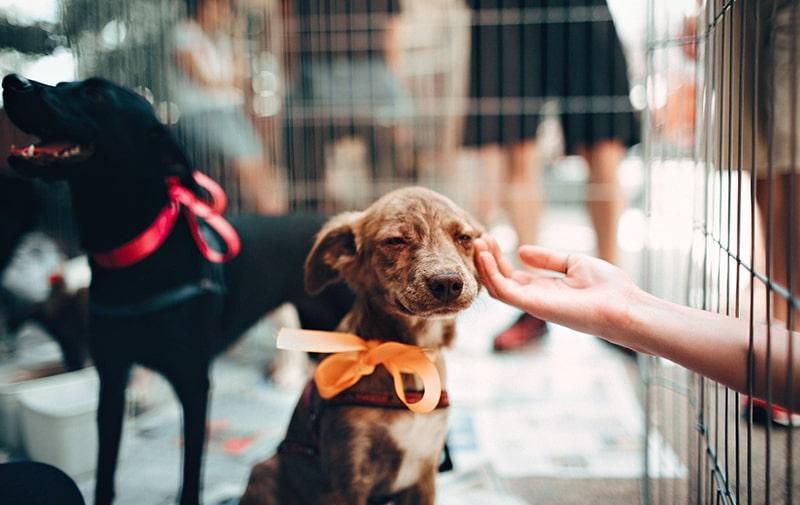 Tierquälerei stoppen und Tiere schützen