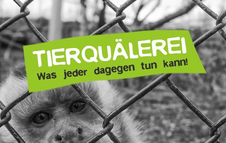 Tierquälerei stoppen - Was jeder zum Schutz der Tiere tun kann