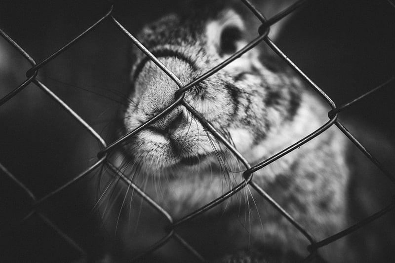 Was jeder gegen Tierquälerei tun kann