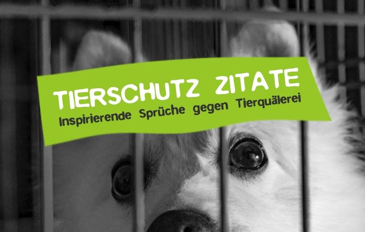 Tierschutz Zitate gegen Tierquälerei