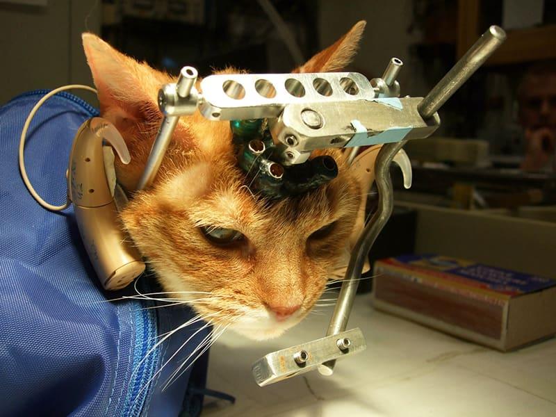 Zahlen und Fakten über Tierversuche