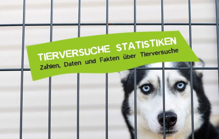Tierversuch Statstiken Zahlen und Fakten