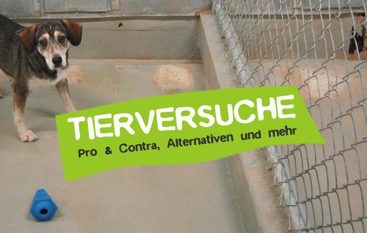 Tierversuche - Definition, Vorteile, Nachteile und Alternativen