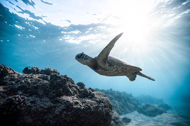 Überfischung und Beifang stoppen