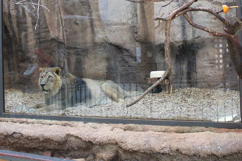 Löwe Zoo - Dinge, die heute nicht mehr zeitgemäß sind