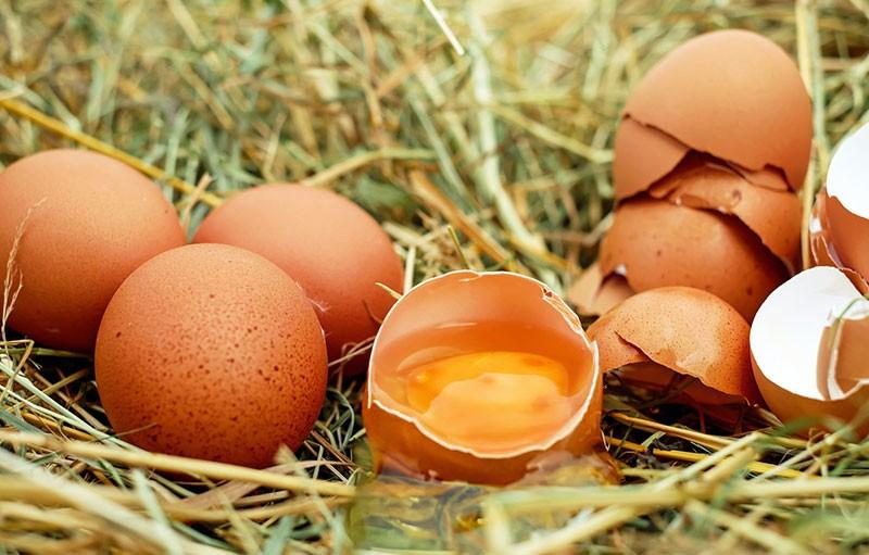 Eier sind die Menstruation des Huhns