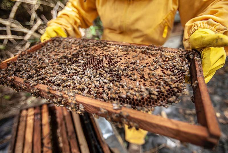 Massenzucht  - Warum Veganer keinen Honig essen