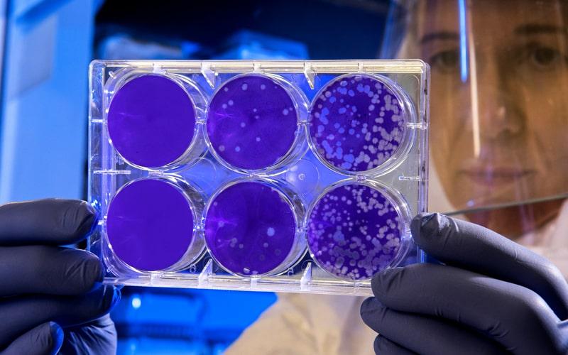 Persönliche Schlussfolgerungen Coronavirus Erkenntnisse