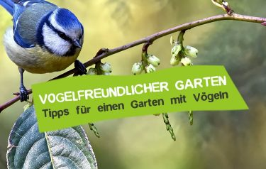 Tipps für einen vogelfreundlichen Garten