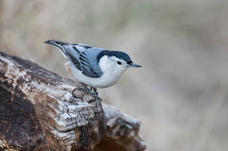 Sitzwarten für einen vogelfreundlichen Garten