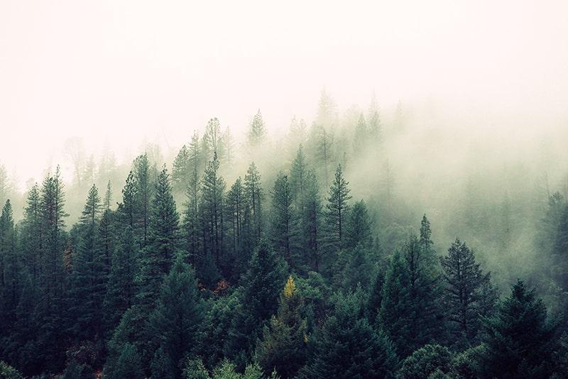 Zitate über Wälder, Waldschutz und Waldsterben