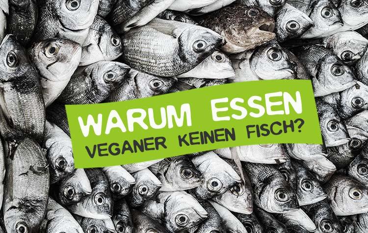 Warum essen Veganer keinen Fisch
