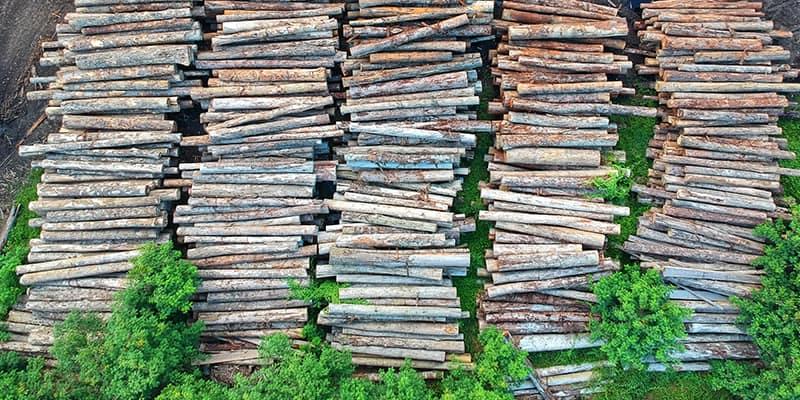 Warum vegan? Abholzung der Regenwälder