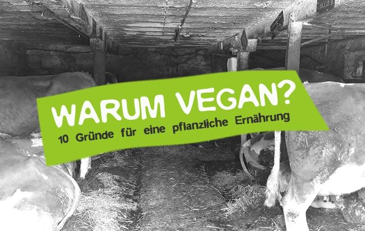 Was spricht für eine vegane Ernährung?