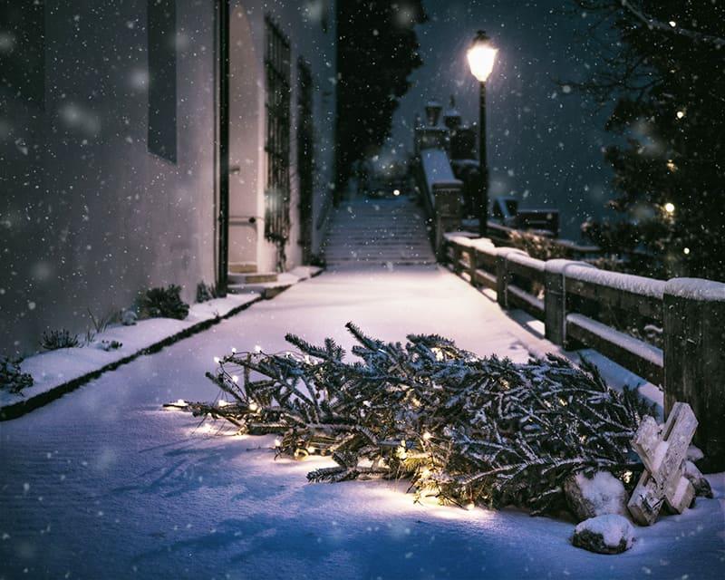 Weihnachtsbaum Alternativen die umweltfreundlich sind