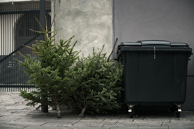 Weihnachtsbaum im Müll entsorgt - nachhaltige Alternativen