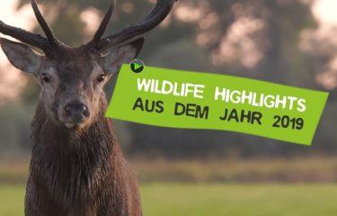 Wildlife Highlights Stephan Schulz 2019