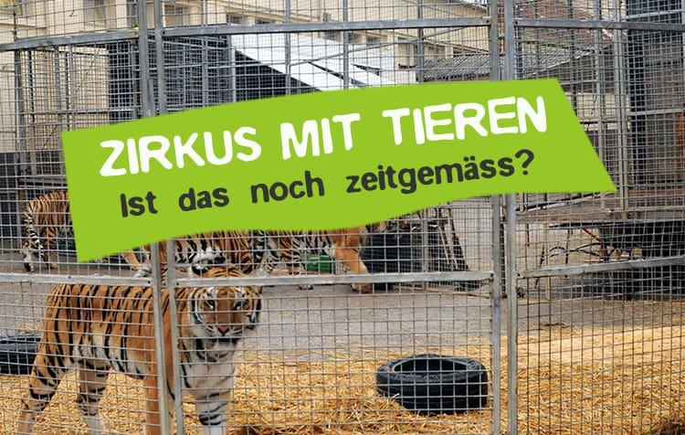 Tiere im Zirkus - sollte das verboten werden?