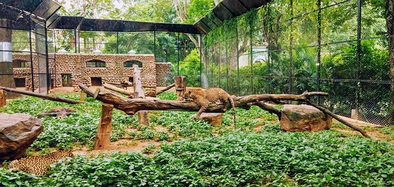Zoos zeitgemäß und sinnvoll?